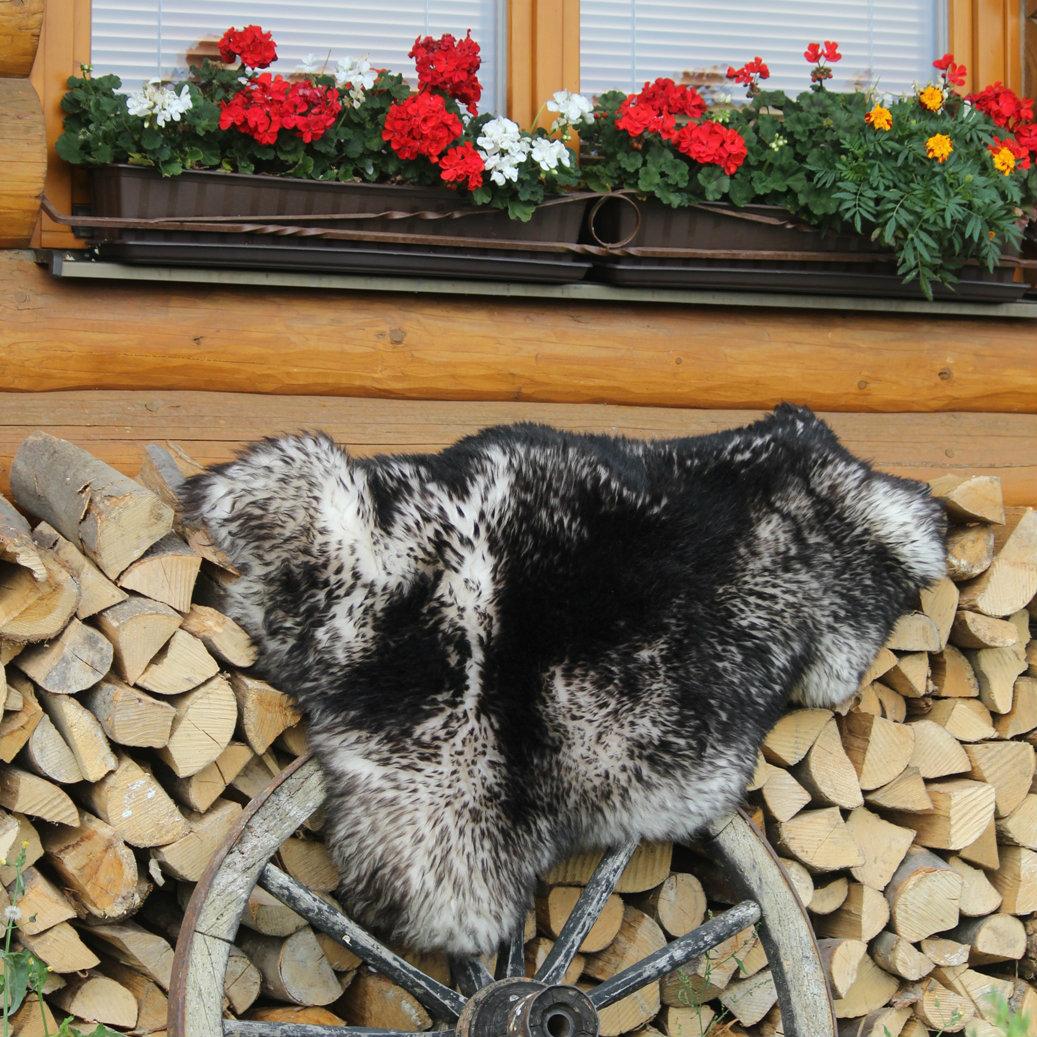 kozusina ovcia vlcia3